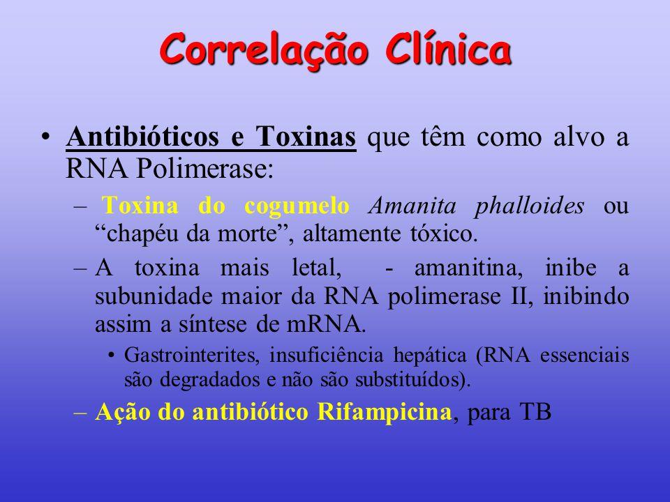 """Correlação Clínica Antibióticos e Toxinas que têm como alvo a RNA Polimerase: – Toxina do cogumelo Amanita phalloides ou """"chapéu da morte"""", altamente"""
