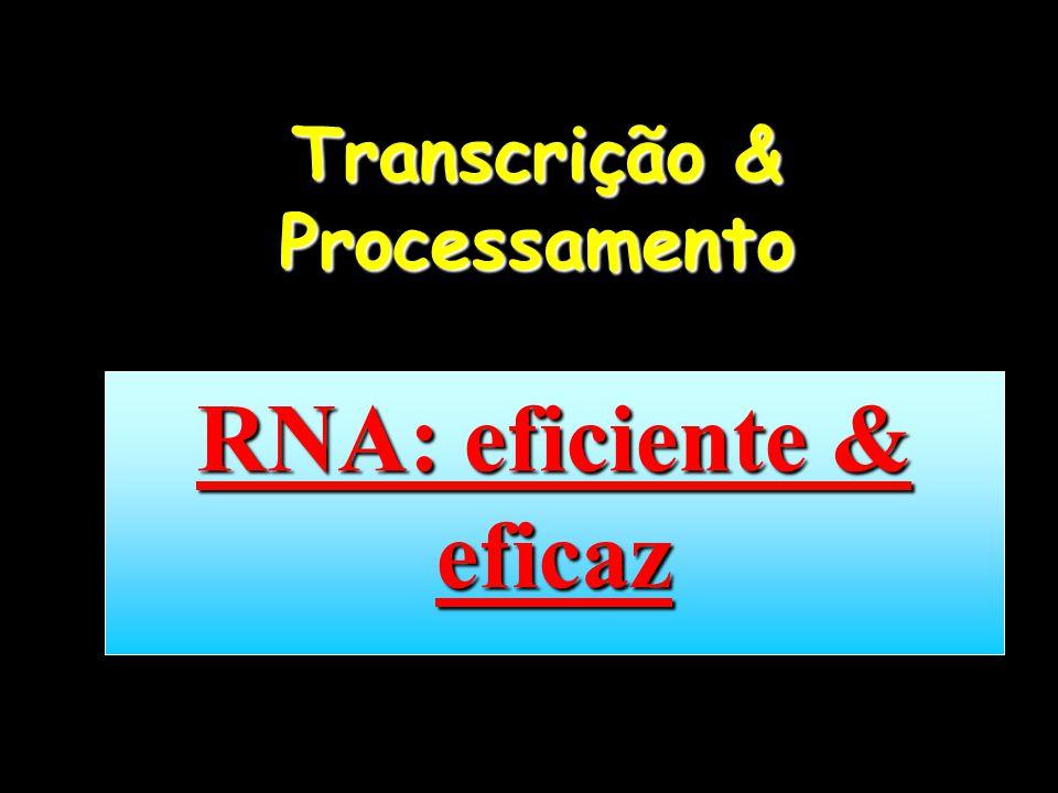 Transcrição & Processamento RNA: eficiente & eficaz