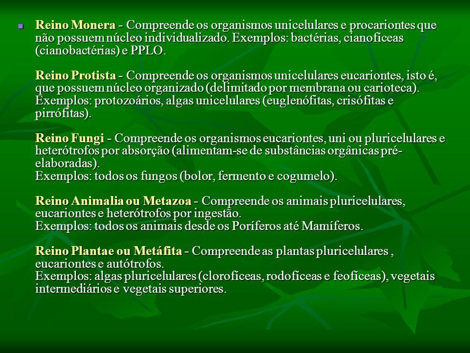 Reino Monera - Compreende os organismos unicelulares e procariontes que não possuem núcleo individualizado.