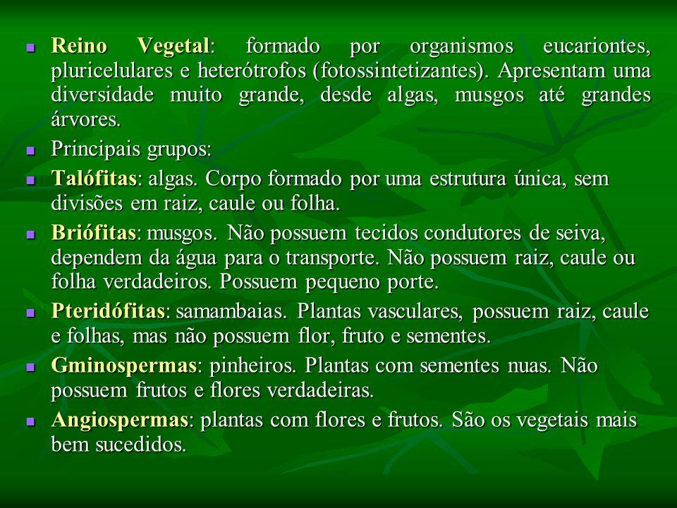 Reino Vegetal: formado por organismos eucariontes, pluricelulares e heterótrofos (fotossintetizantes).