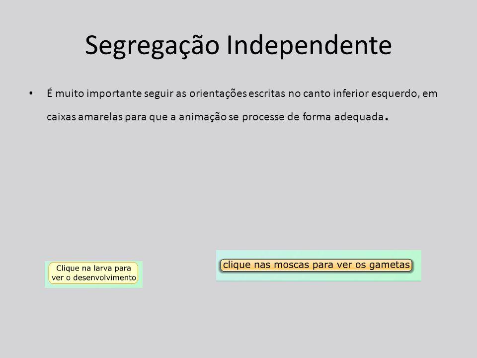 Segregação Independente É muito importante seguir as orientações escritas no canto inferior esquerdo, em caixas amarelas para que a animação se processe de forma adequada.