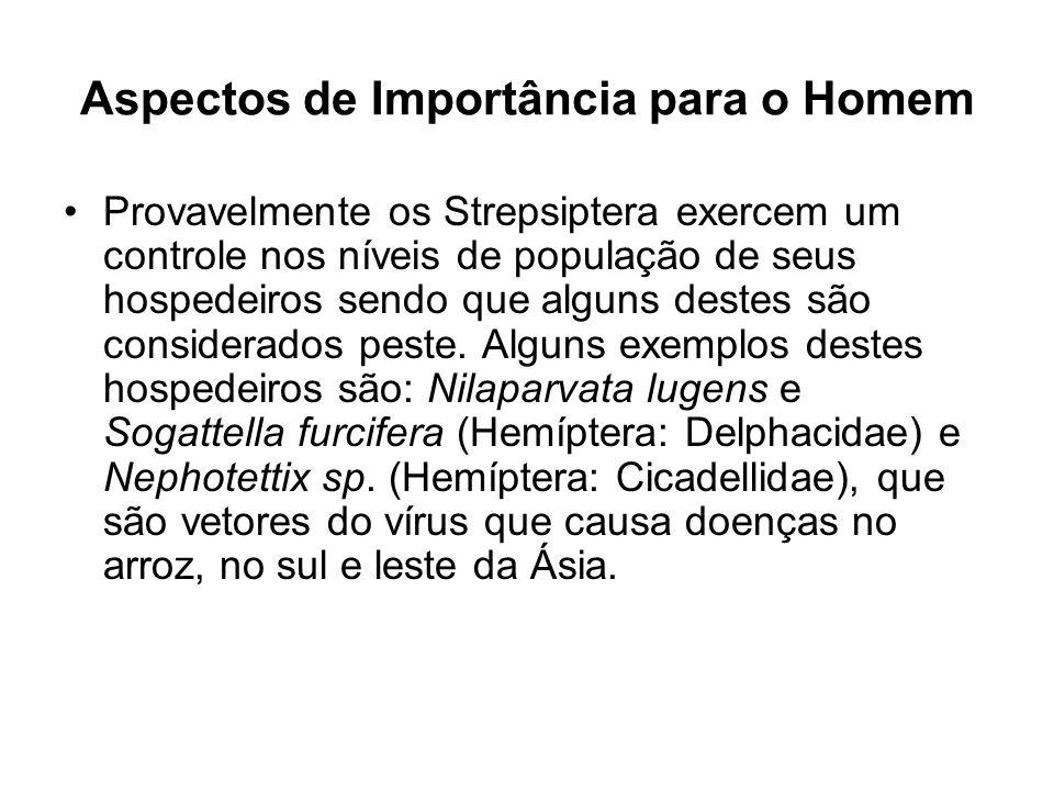 Aspectos de Importância para o Homem Provavelmente os Strepsiptera exercem um controle nos níveis de população de seus hospedeiros sendo que alguns de
