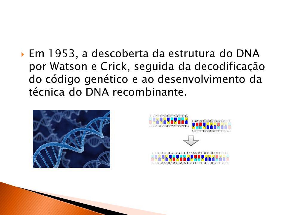  Em 1953, a descoberta da estrutura do DNA por Watson e Crick, seguida da decodificação do código genético e ao desenvolvimento da técnica do DNA recombinante.