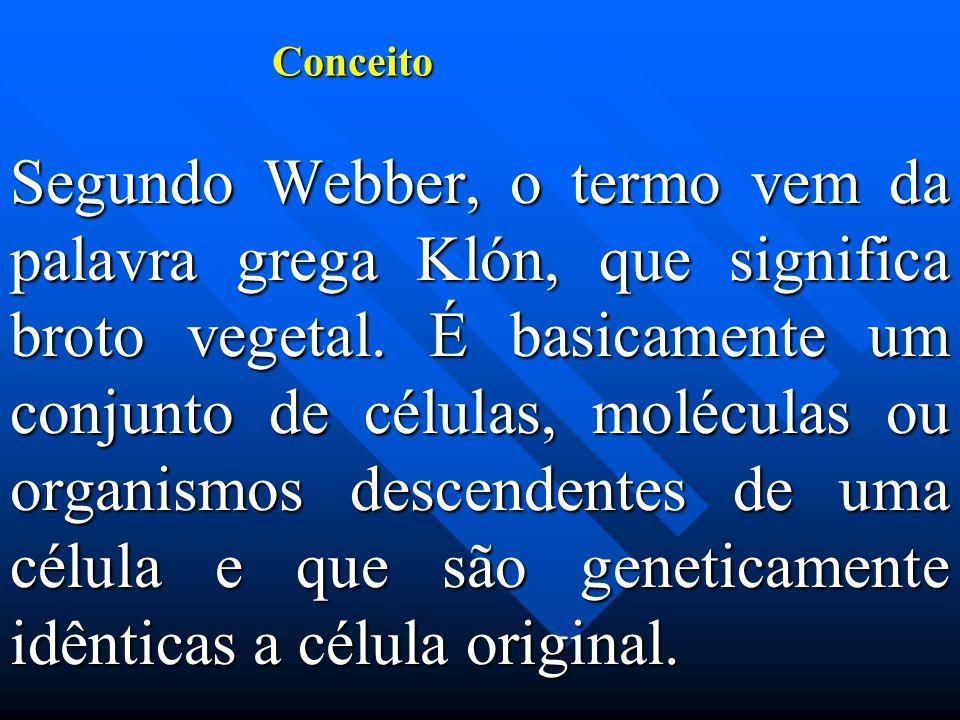 Conceito Segundo Webber, o termo vem da palavra grega Klón, que significa broto vegetal.