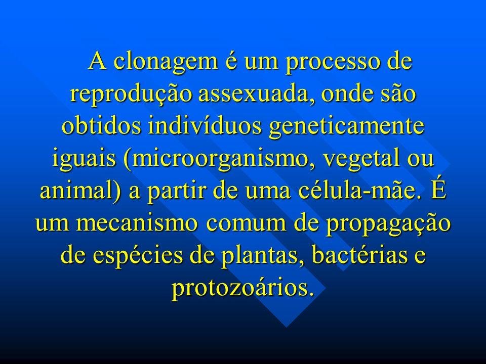 A clonagem é um processo de reprodução assexuada, onde são obtidos indivíduos geneticamente iguais (microorganismo, vegetal ou animal) a partir de uma célula-mãe.