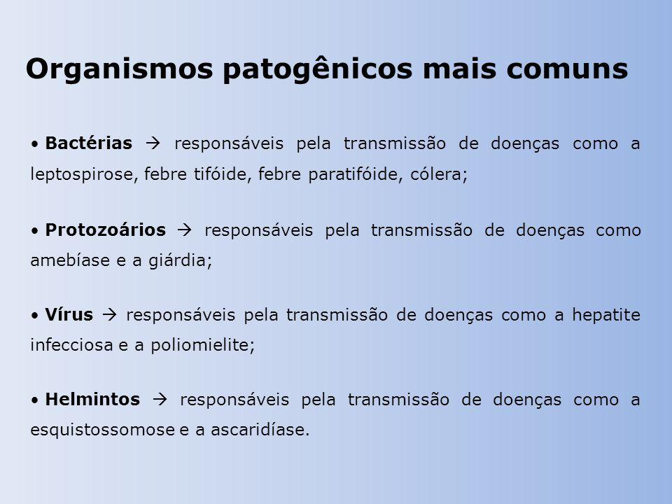 Organismos patogênicos mais comuns Bactérias  responsáveis pela transmissão de doenças como a leptospirose, febre tifóide, febre paratifóide, cólera; Protozoários  responsáveis pela transmissão de doenças como amebíase e a giárdia; Vírus  responsáveis pela transmissão de doenças como a hepatite infecciosa e a poliomielite; Helmintos  responsáveis pela transmissão de doenças como a esquistossomose e a ascaridíase.