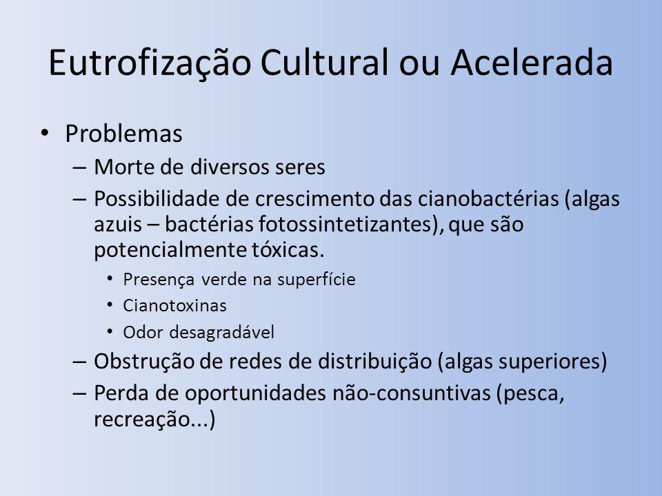 Eutrofização Cultural ou Acelerada Problemas – Morte de diversos seres – Possibilidade de crescimento das cianobactérias (algas azuis – bactérias fotossintetizantes), que são potencialmente tóxicas.
