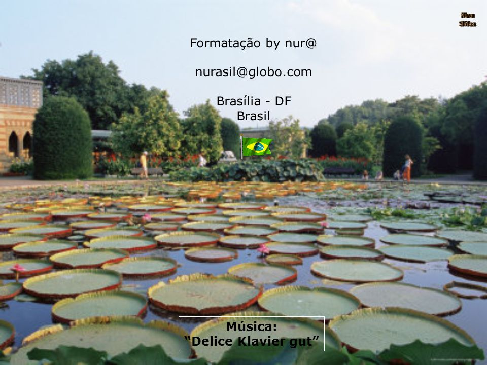 A maior lili aquática no mundo é a Vitória Régia, nativa da bacia do Rio Amazonas. Suas folhas arredondadas atingem até 2 m de diâmetro e possuem as b