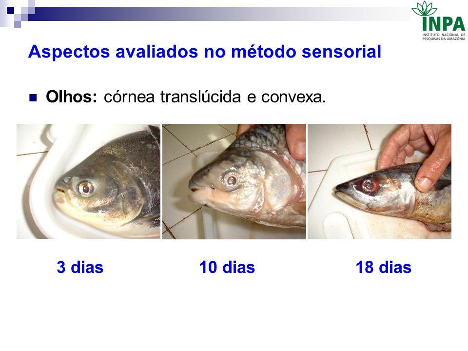 Aspectos avaliados no método sensorial Olhos: córnea translúcida e convexa. 3 dias 10 dias 18 dias