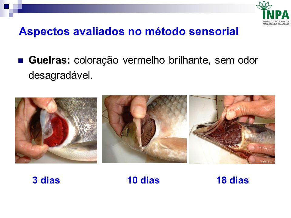 Aspectos avaliados no método sensorial Guelras: coloração vermelho brilhante, sem odor desagradável. 3 dias 10 dias 18 dias
