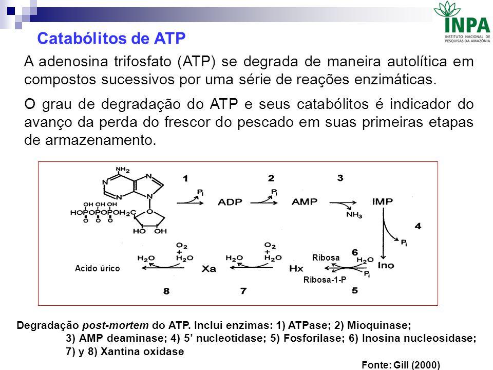 Ribosa Ribosa-1-P Acido úrico Degradação post-mortem do ATP. Inclui enzimas: 1) ATPase; 2) Mioquinase; 3) AMP deaminase; 4) 5' nucleotidase; 5) Fosfor