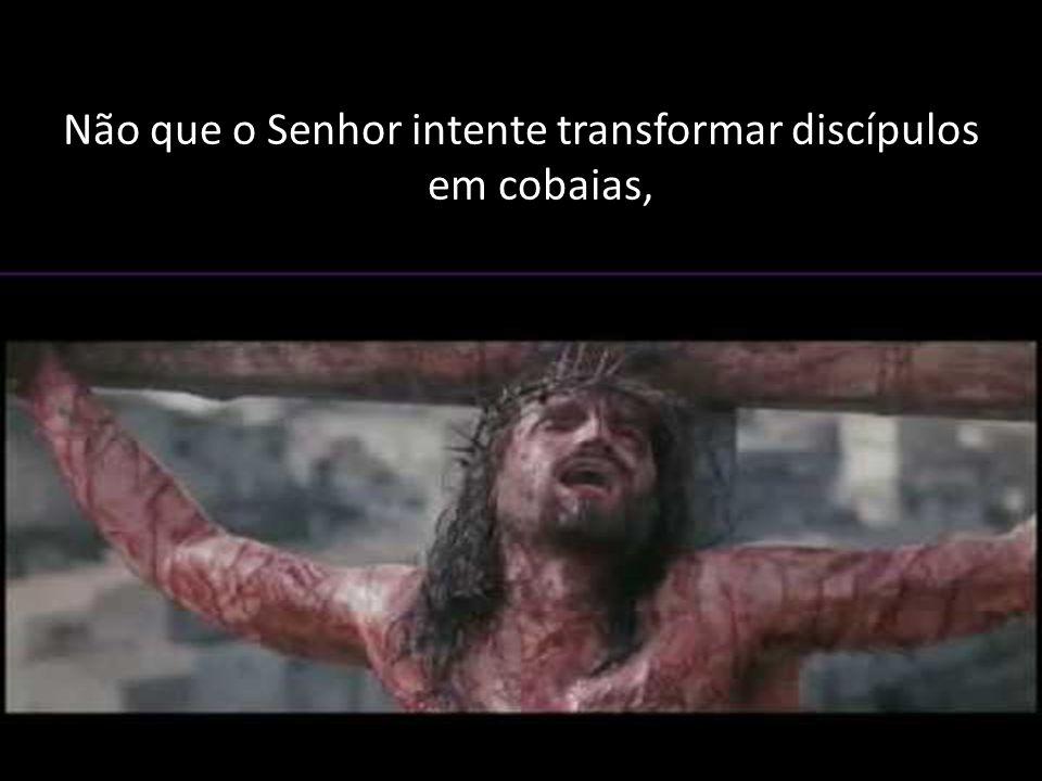 Não que o Senhor intente transformar discípulos em cobaias,