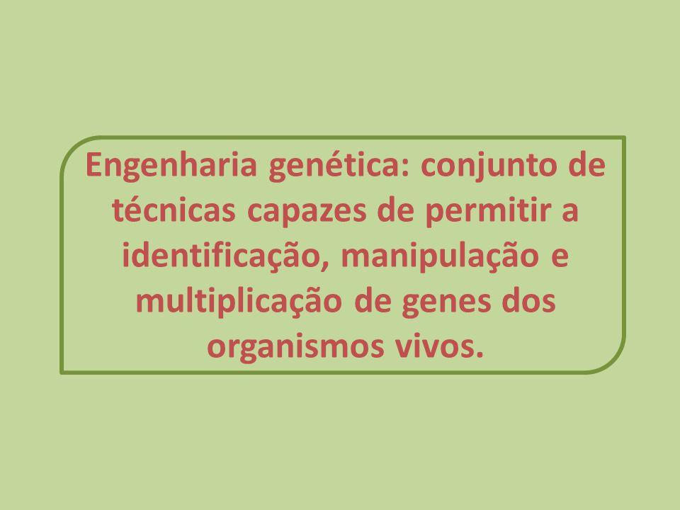 Engenharia genética: conjunto de técnicas capazes de permitir a identificação, manipulação e multiplicação de genes dos organismos vivos.