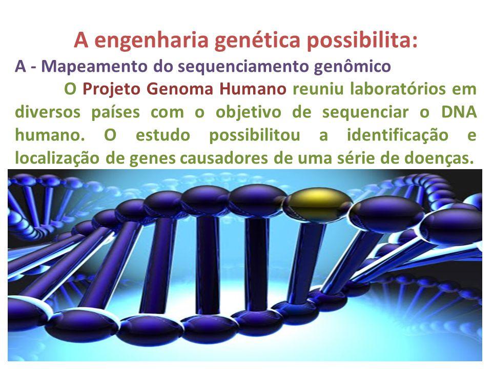 A engenharia genética possibilita: A - Mapeamento do sequenciamento genômico O Projeto Genoma Humano reuniu laboratórios em diversos países com o obje