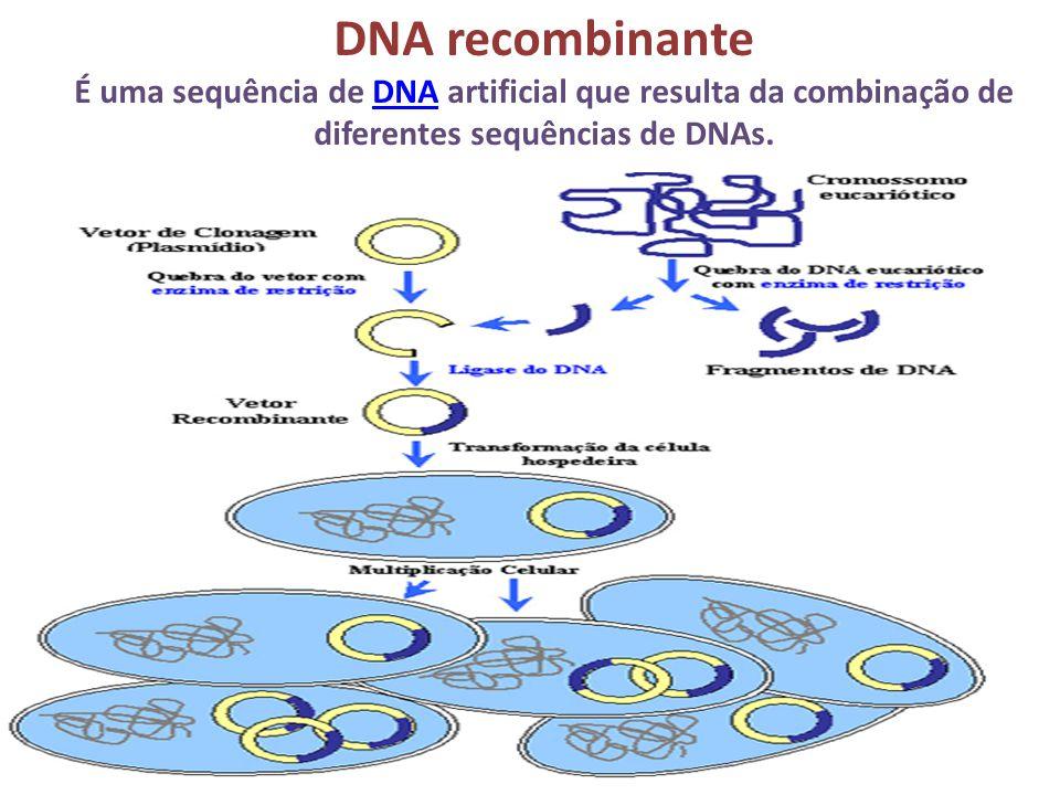 DNA recombinante É uma sequência de DNA artificial que resulta da combinação de diferentes sequências de DNAs.DNA