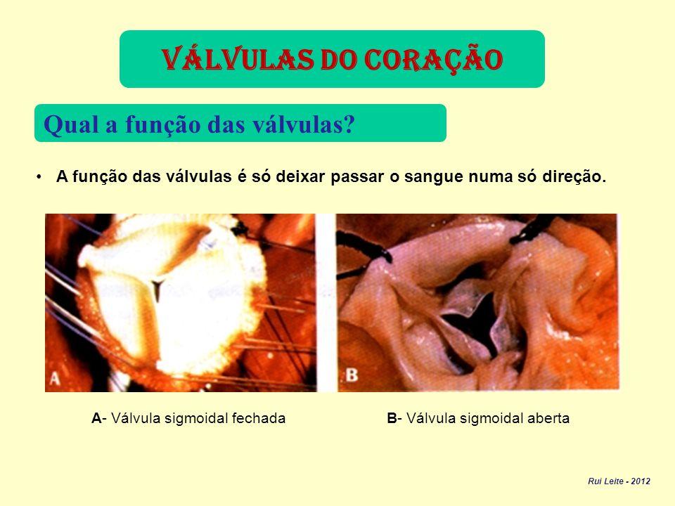 O coração dos mamíferos, incluindo o do homem, tem quatro cavidades, duas aurículas e dois ventrículos.