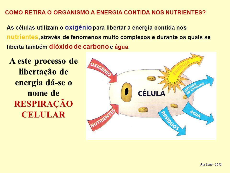 O ORGANISMO NECESSITA DE ENERGIA PARA: DESLOCAR-SE REALIZAR AS FUNÇÕES VITAIS CRESCER E RENOVAR AS CÉLULAS MANTER A TEMPERATURA INTERNA Rui Leite - 2012