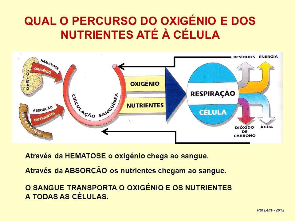 COMO RETIRA O ORGANISMO A ENERGIA CONTIDA NOS NUTRIENTES.