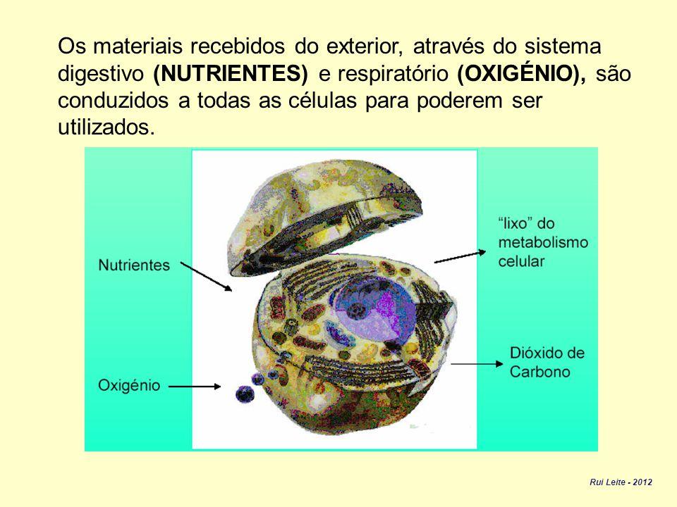 Os materiais recebidos do exterior, através do sistema digestivo (NUTRIENTES) e respiratório (OXIGÉNIO), são conduzidos a todas as células para poderem ser utilizados.