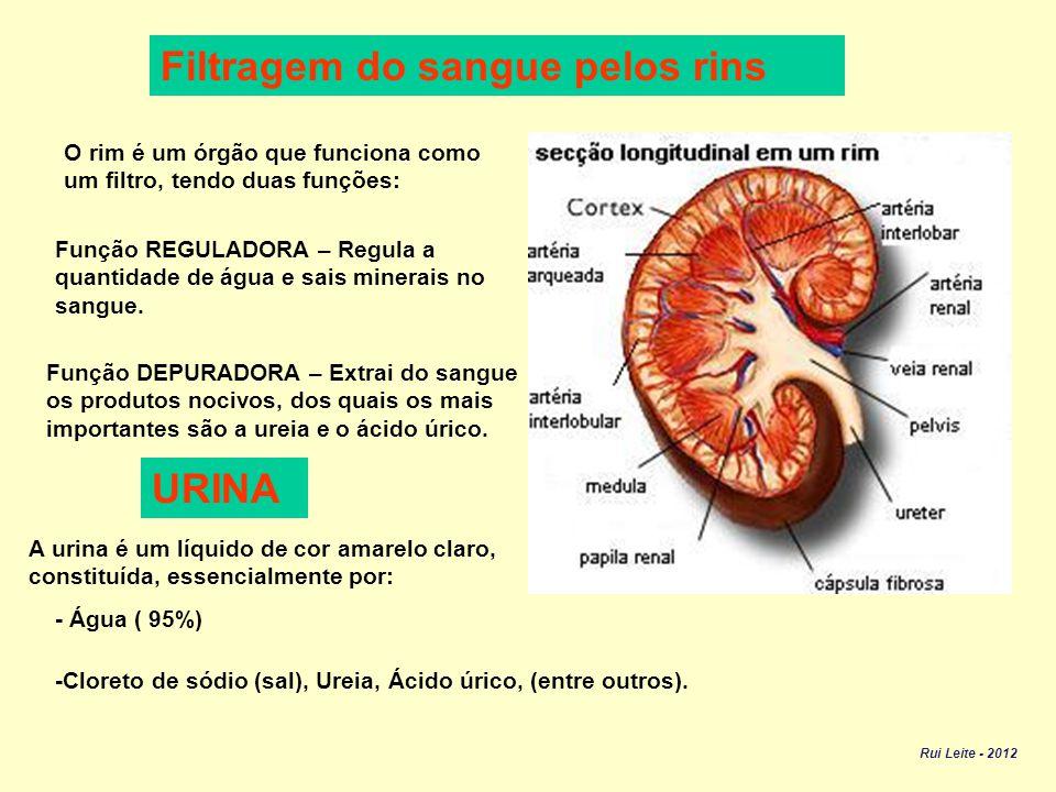 SISTEMA URINÁRIO É constituído por: Dois ureteres – Tubos musculosos e elásticos que saem um de cada rim.