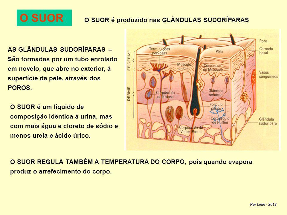 Filtragem do sangue pelos rins O rim é um órgão que funciona como um filtro, tendo duas funções: Função REGULADORA – Regula a quantidade de água e sais minerais no sangue.