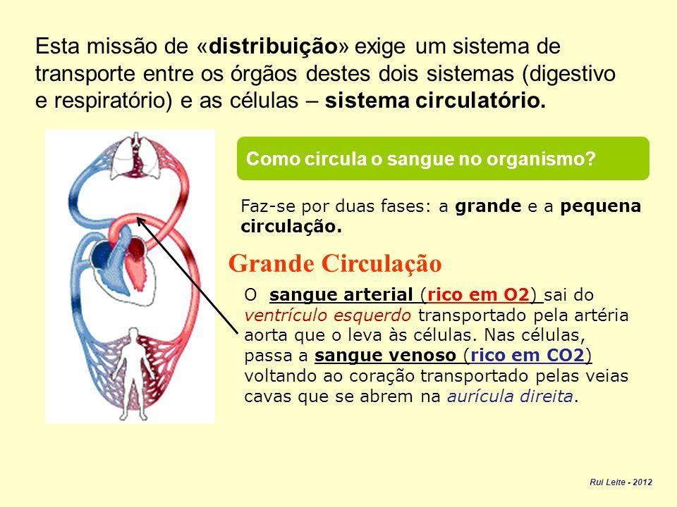 Esta missão de «distribuição» exige um sistema de transporte entre os órgãos destes dois sistemas (digestivo e respiratório) e as células – sistema circulatório.