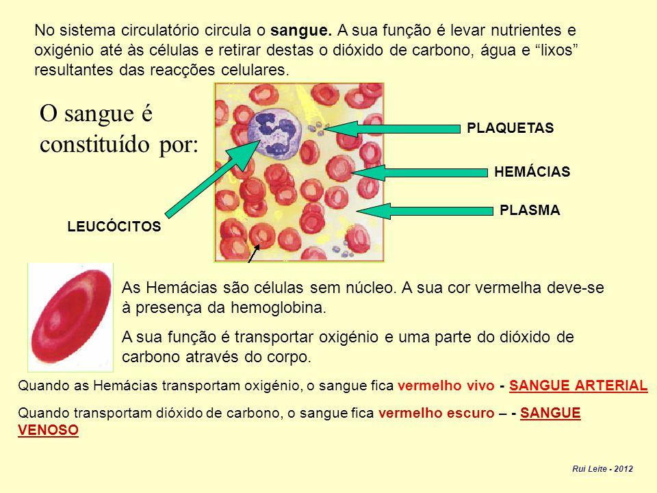 No sistema circulatório circula o sangue.