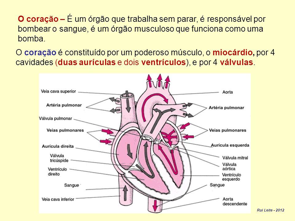 No sangue também estão presentes leucócitos, cuja função é defender o nosso organismo.