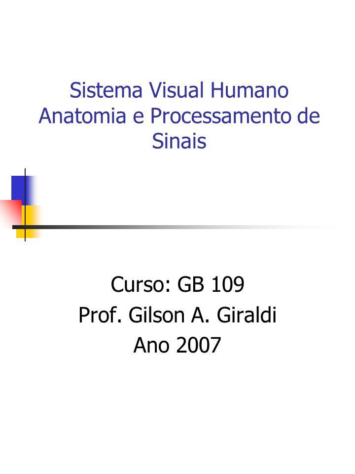 Sistema Visual Humano Anatomia e Processamento de Sinais Curso: GB 109 Prof.