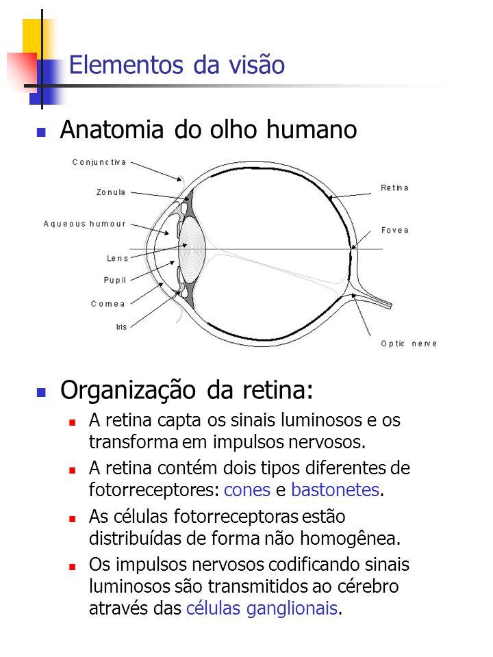 Elementos da visão Anatomia do olho humano Organização da retina: A retina capta os sinais luminosos e os transforma em impulsos nervosos.