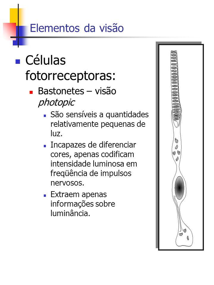 Elementos da visão Células fotorreceptoras: Bastonetes – visão photopic São sensíveis a quantidades relativamente pequenas de luz.