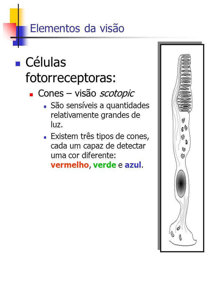 Elementos da visão Células fotorreceptoras: Cones – visão scotopic São sensíveis a quantidades relativamente grandes de luz.