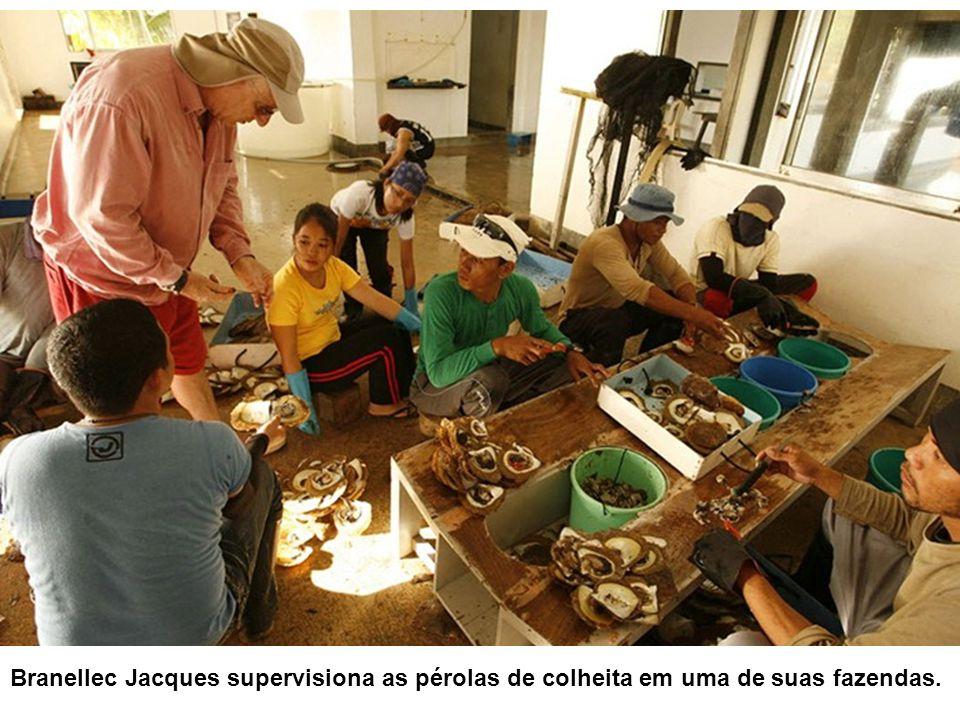 As ostras são cuidadosamente lavadas antes de serem abertas.