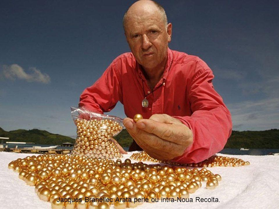 Clique para avançar! Jewelmer é a única fabricante pérolas do mundo com sucesso produzida pérolas com uma cor natural de ouro. depois décadas de pesqu