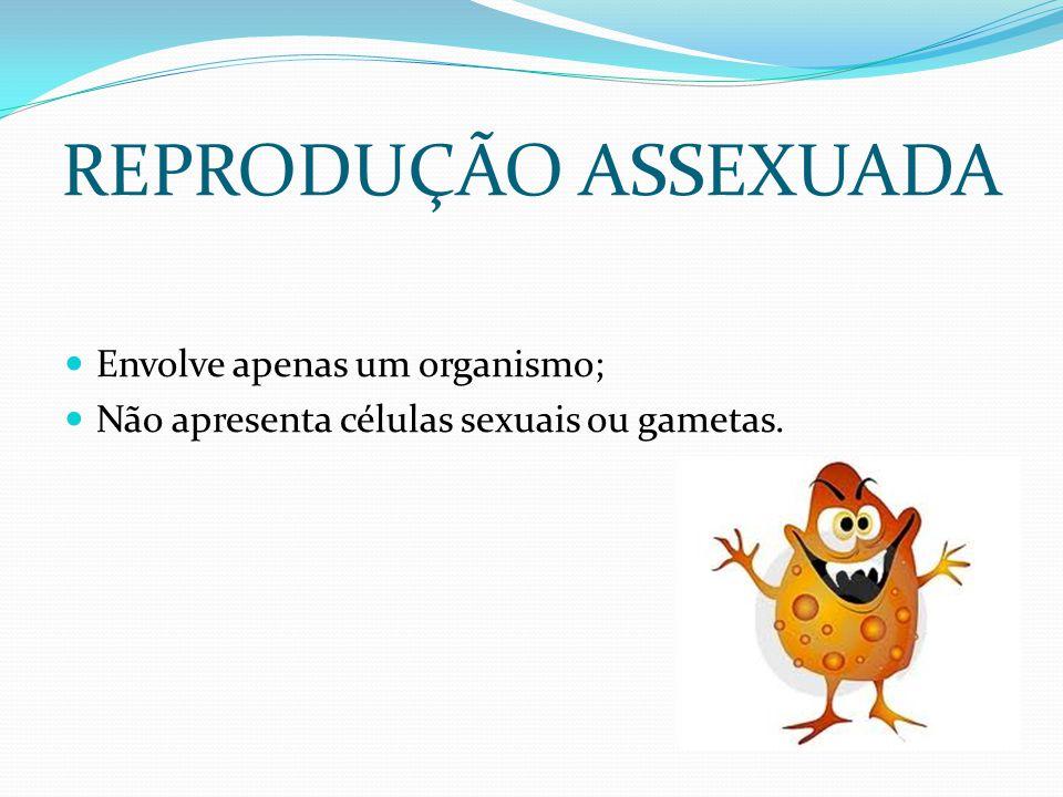 REPRODUÇÃO ASSEXUADA Envolve apenas um organismo; Não apresenta células sexuais ou gametas.
