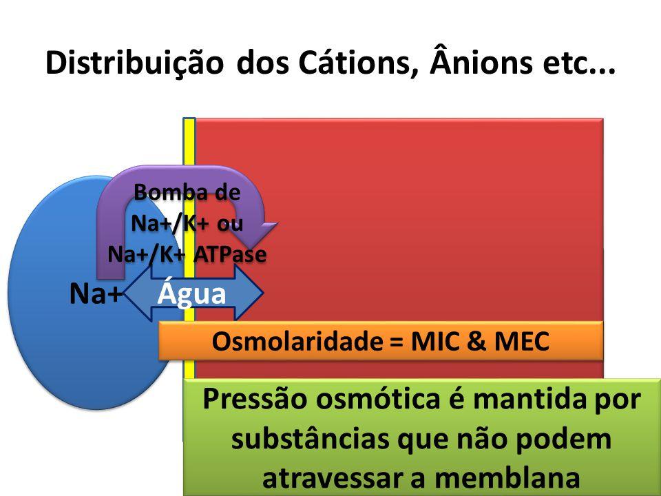 Distribuição dos Cátions, Ânions etc... Na+ Cl- HCO3- Na+ Cl- HCO3- Cátion ânions Na+ = osmolaridade (O número de moléculas de Na+ por unidade de água