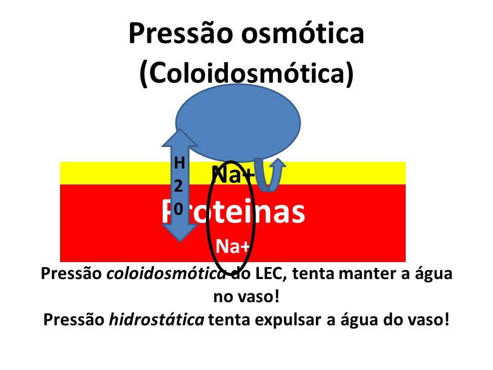 Pressão osmótica (C oloidosmótica) Na+ Proteinas Na+ Pressão coloidosmótica do LEC, tenta manter a água no vaso! Pressão hidrostática tenta expulsar a