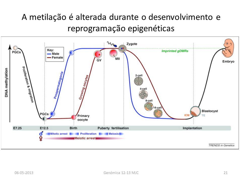 A metilação é alterada durante o desenvolvimento e reprogramação epigenéticas 06-05-2013Genómica 12-13 MJC21