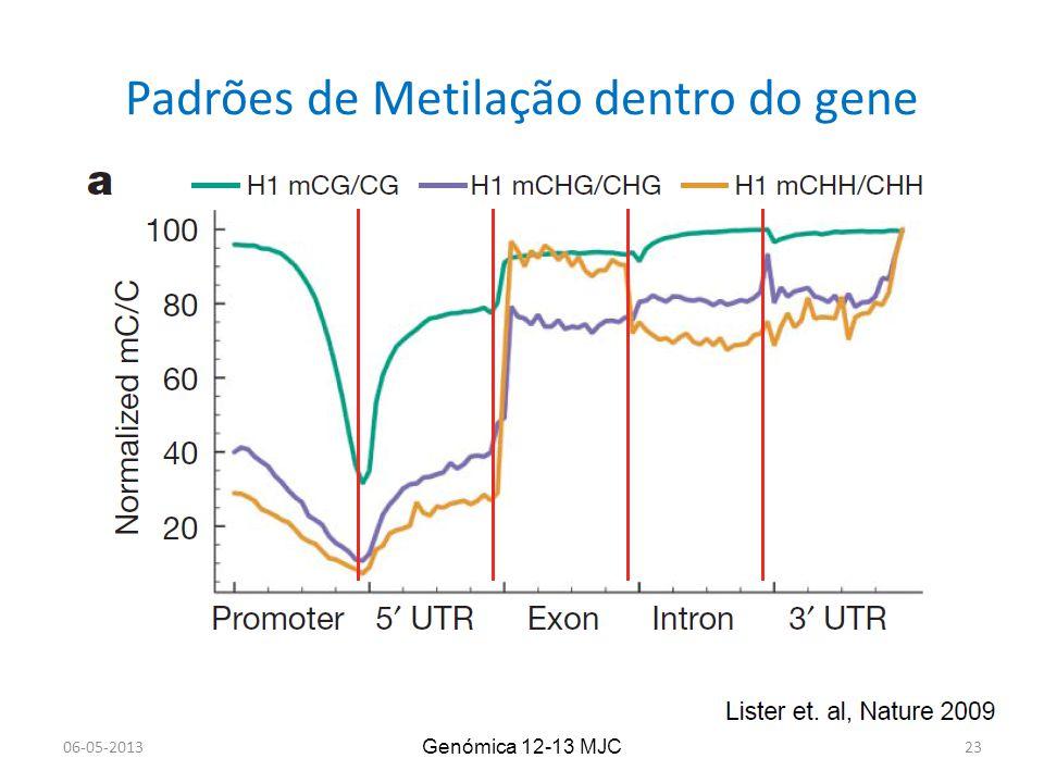 Padrões de Metilação dentro do gene Genómica 12-13 MJC 06-05-201323