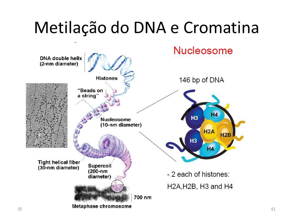 Metilação do DNA e Cromatina 06-05-2013Genómica 12-13 MJC41