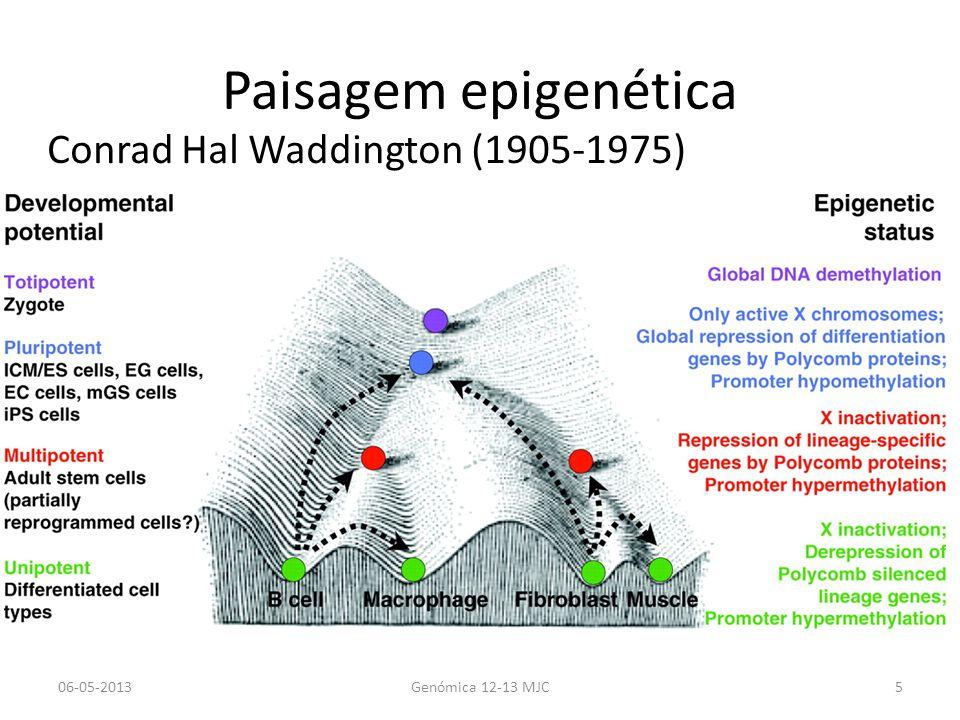 Epigenética/Epigenómica Conrad Waddington, 1942: Estado e actividade ou expressão genética (Fenótipo) herdada por mitose ou meiose e que é independente da sequencia de DNA.