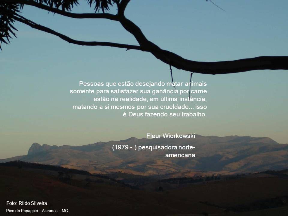 Foto: Rildo Silveira Pico do Papagaio – Aiuruoca – MG Não são só belas penas que fazem belos pássaros.