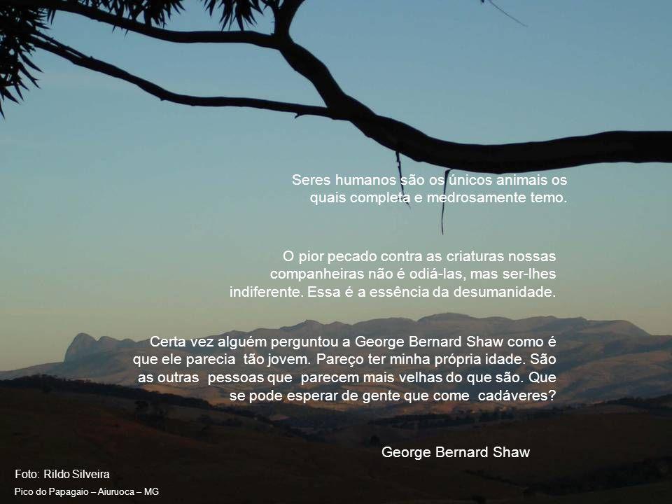 Foto: Rildo Silveira Pico do Papagaio – Aiuruoca – MG Eu também quero a volta à natureza.