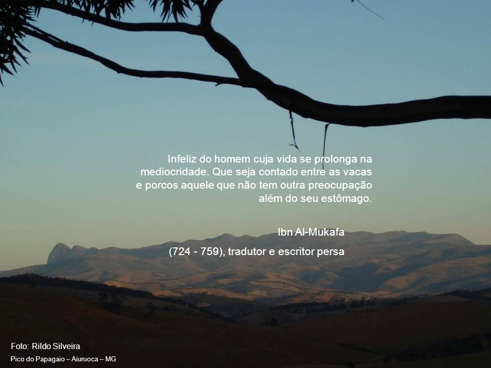Foto: Rildo Silveira Pico do Papagaio – Aiuruoca – MG A Natureza só produz animais bobos.