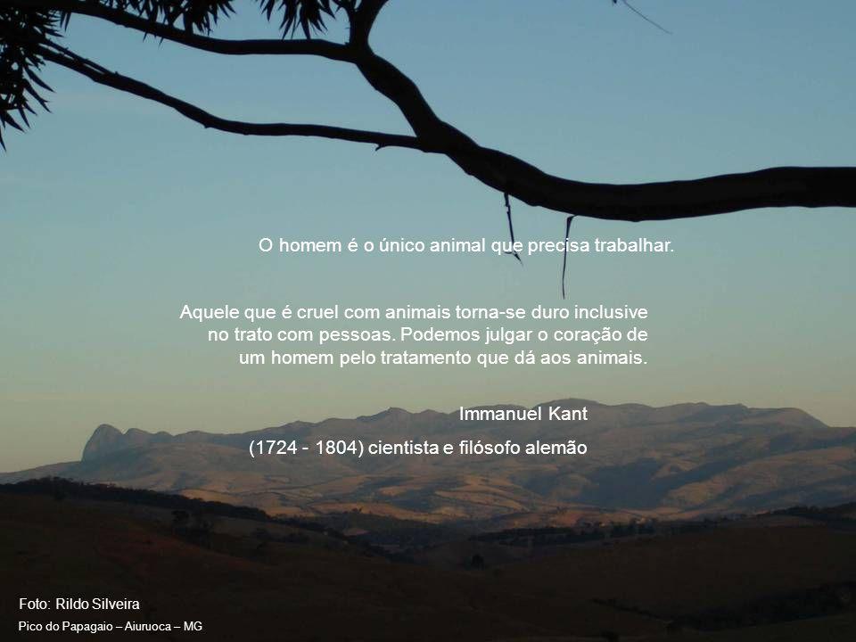 Foto: Rildo Silveira Pico do Papagaio – Aiuruoca – MG Minha música é melhor compreendida por crianças e animais.
