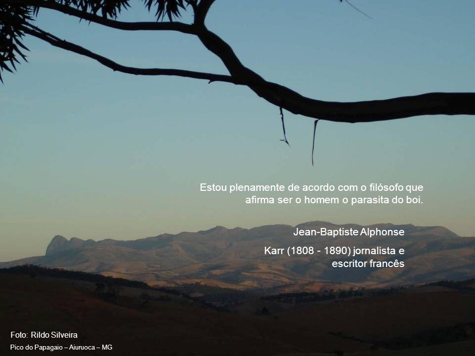 Foto: Rildo Silveira Pico do Papagaio – Aiuruoca – MG Os animais selvagens nunca matam por esporte.