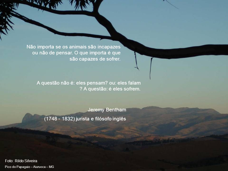 Foto: Rildo Silveira Pico do Papagaio – Aiuruoca – MG Estou plenamente de acordo com o filósofo que afirma ser o homem o parasita do boi.