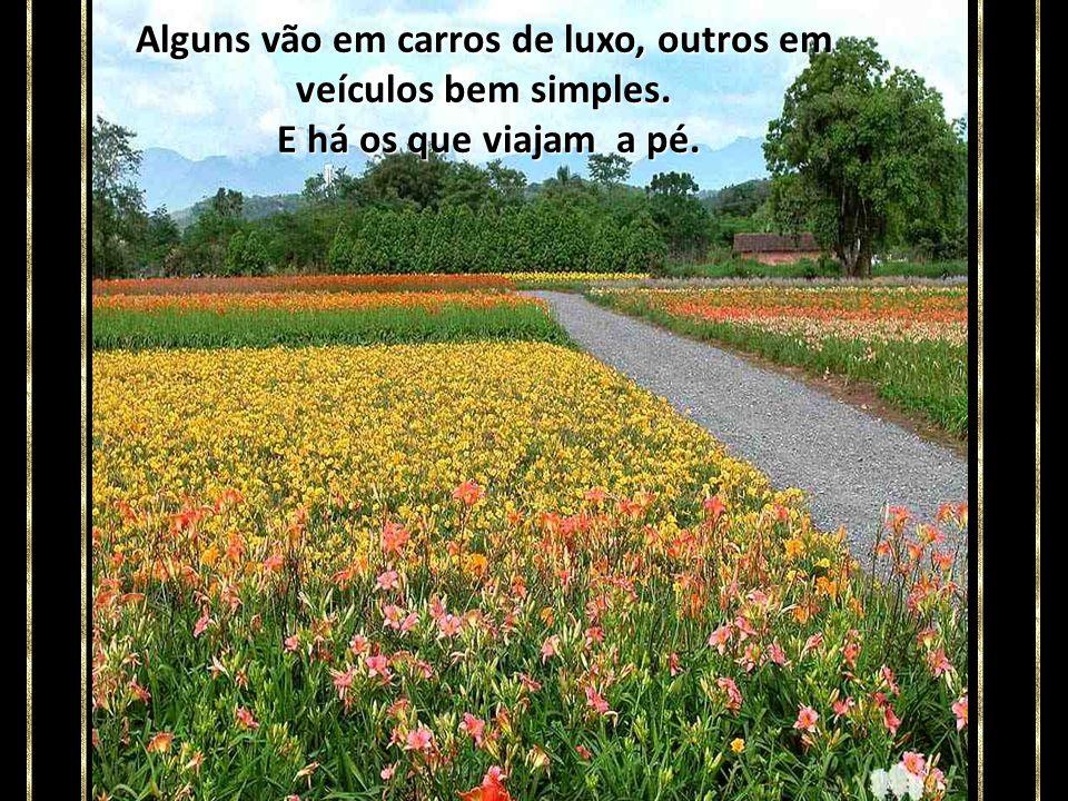 Pela estrada dessa nossa vida, muitos caminham com seus próprios pés. Outros são carregados por empregados ou parentes.
