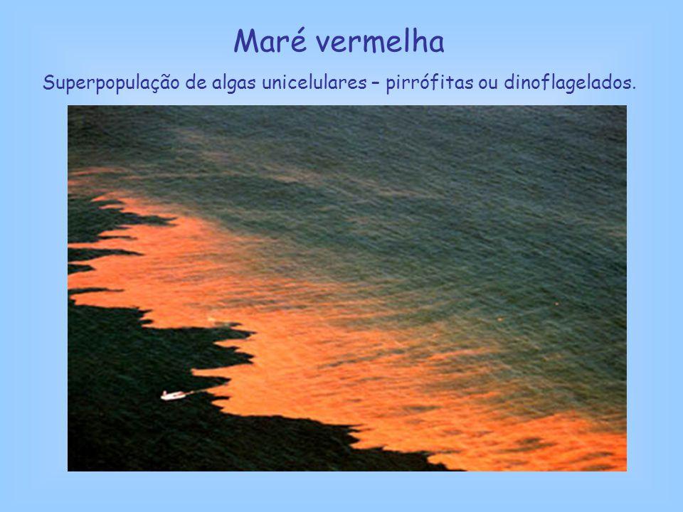 Maré vermelha Superpopulação de algas unicelulares – pirrófitas ou dinoflagelados.