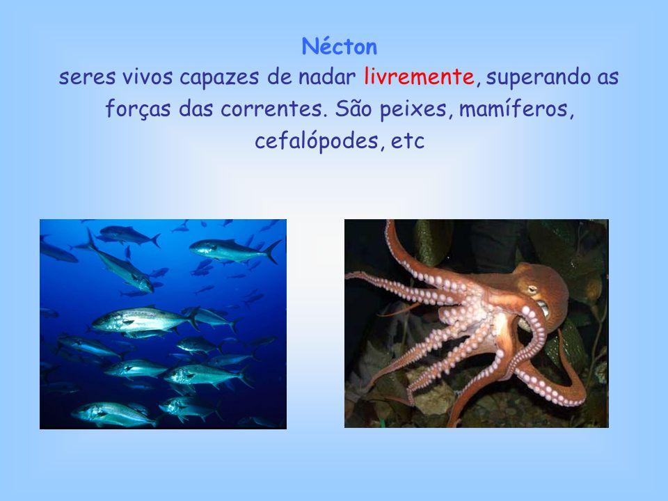 Nécton seres vivos capazes de nadar livremente, superando as forças das correntes. São peixes, mamíferos, cefalópodes, etc